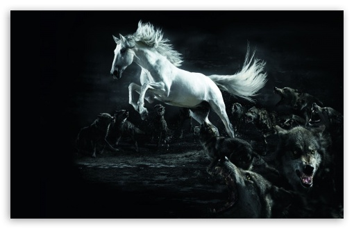 Download Horse and Wolves UltraHD Wallpaper