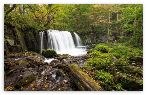 Download Forest Waterfalls, HDR UltraHD Wallpaper