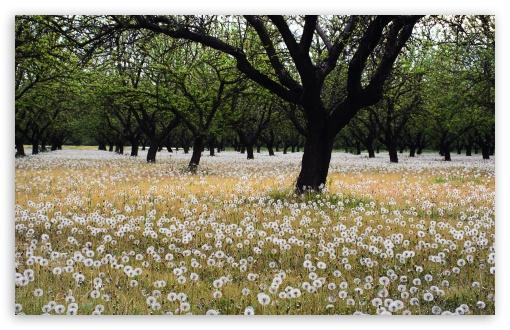 Download Beautiful Dandelion Field UltraHD Wallpaper