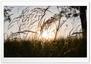 Kocevje Sunset
