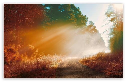 Download Misty Forest Road, Autumn UltraHD Wallpaper