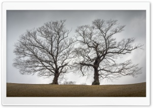 Two Trees Together, Autumn