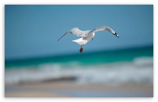 Download Seagull UltraHD Wallpaper