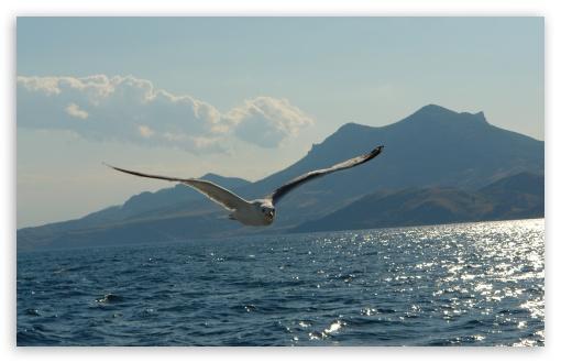Download Seagull Above Lake UltraHD Wallpaper