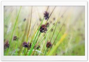 Herbs, Summer