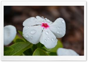 Dew Beauty