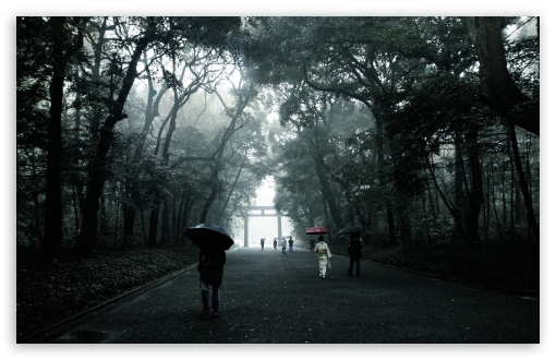 Download Foggy Walk UltraHD Wallpaper