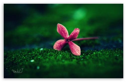 Download Flower on Grass UltraHD Wallpaper