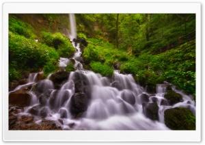 Forest Waterfall, Summer