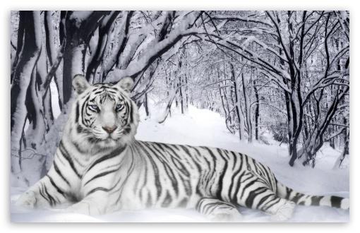 Download Bengal Tiger UltraHD Wallpaper