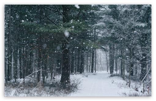 Download Snowfall, Path, Trees, Forest, Winter UltraHD Wallpaper