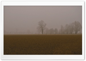 Cold Foggy Day