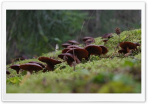 Dwarfs in the Forest
