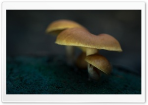 Mushrooms, Soil, Macro