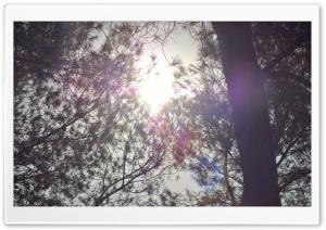Sun Shining Through The Crown...
