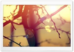 Winter Sunlight Lens Flare