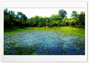 Beautiful Botanical Garden,...