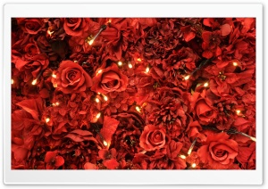 Red Roses Lights