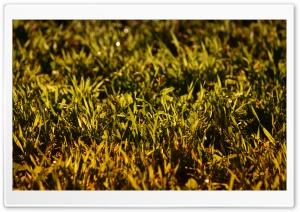 Grass, Summer