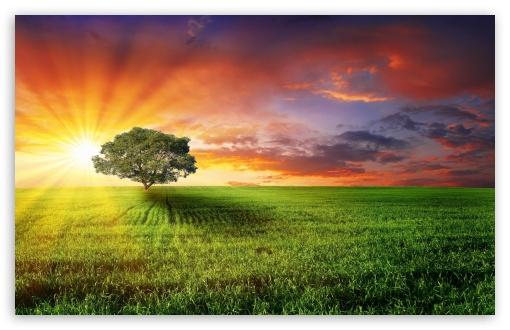 Download Field Landscape UltraHD Wallpaper
