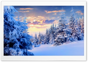 Fir Trees Under The Snow, Forest