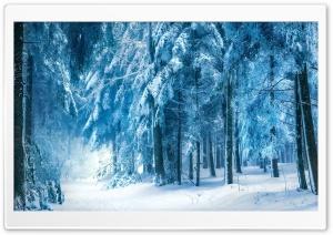 Under Heavy Snow