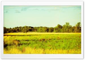 Rurality