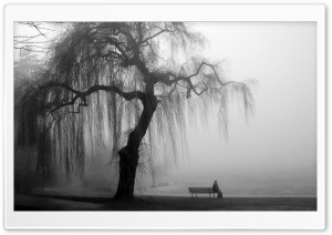 Willow Tree Black and White
