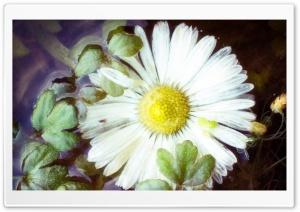 Flower In Water