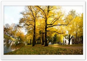 Yellow Trees - Sunny Autumn...
