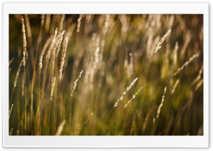 Long Grass Bokeh
