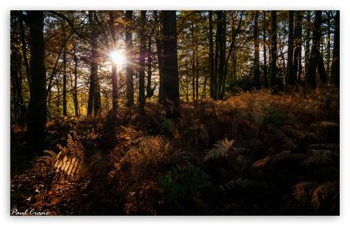 Download Autumn Rays UltraHD Wallpaper
