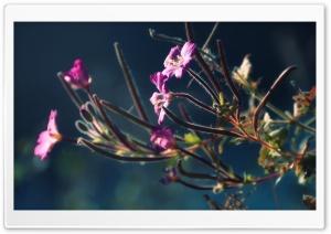 Armenia, Nadia Lake Flower