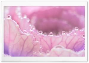 Morning Dew On Pink Flower
