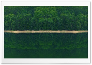 Dark Green Forest by the River