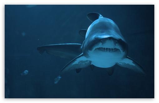 Download Fierce Shark UltraHD Wallpaper