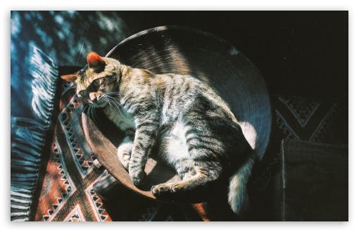 Download Relaxed Cat UltraHD Wallpaper