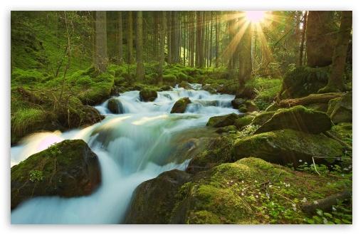 Download Forest Sunshine UltraHD Wallpaper