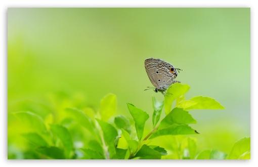 Download Butterfly UltraHD Wallpaper