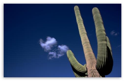 Download Saguaro Cactus UltraHD Wallpaper