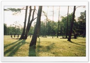 Shamanka Forest (Vintage...