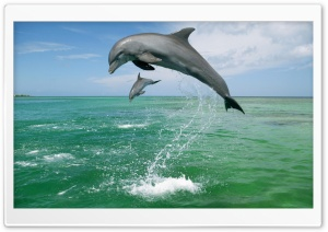 Bottlenose Dolphins Tursiops...