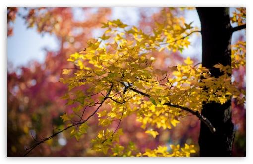 Download Golden Autumn Leaves UltraHD Wallpaper