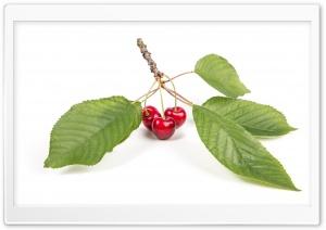 Red Cherries, Green Leaves,...