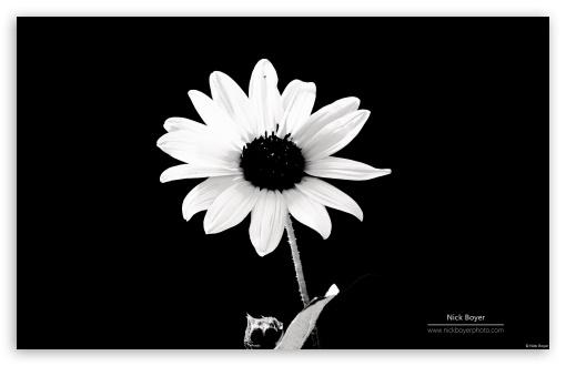 Download Balck and White UltraHD Wallpaper