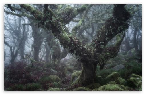Download Wistman s Wood, Dartmoor England Enchanted... UltraHD Wallpaper