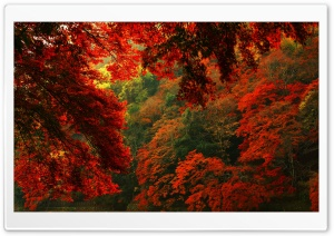 Red and Green Forest