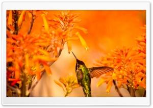 Beautiful Hummingbird Feeding