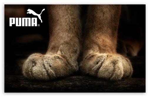 Download Puma UltraHD Wallpaper