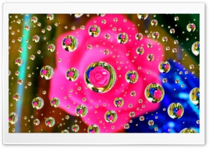 Pink Flower Water Drop...